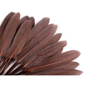 Dísz kacsa toll hossza 9-14 cm - természetes barna