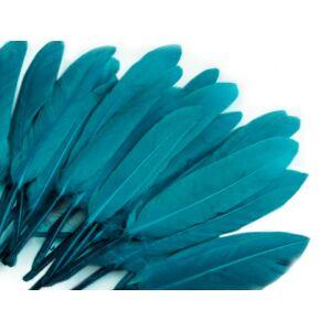 Dísz kacsa toll hossza 9-14 cm - teal